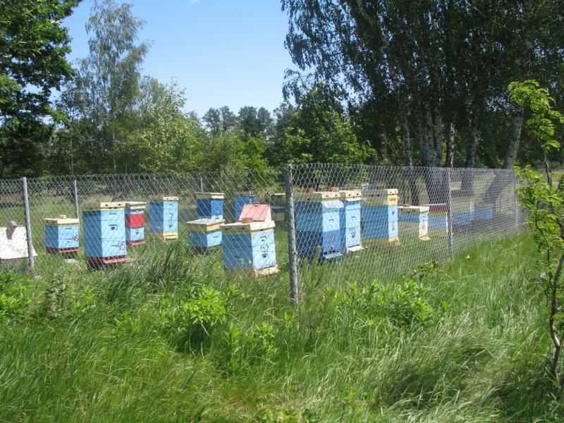pszczelarstwo-kielce-12