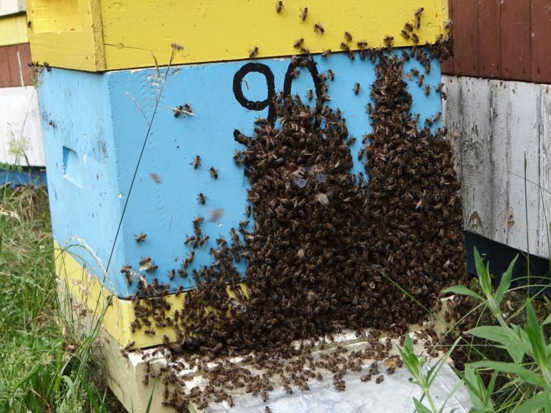 pszczelarstwo-kielce-14