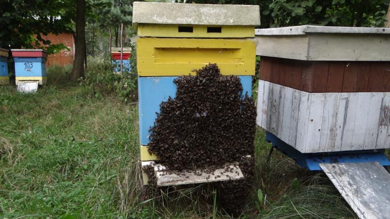 pszczelarstwo-kielce-15