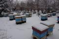 pszczelarstwo-kielce-11
