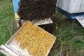pszczelarstwo-kielce-16